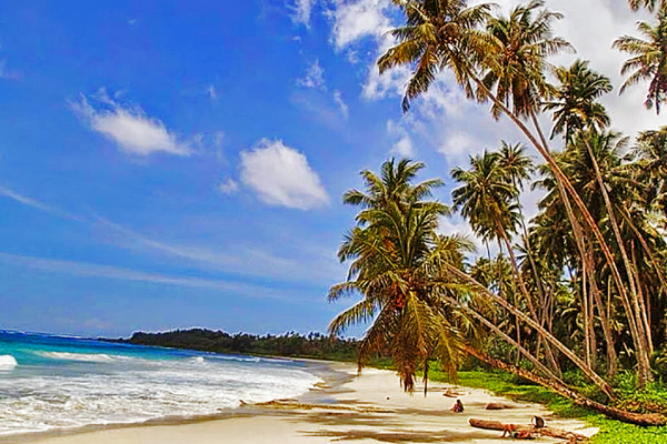 Beautifull Palm Trees and nature on Simeulue Beach