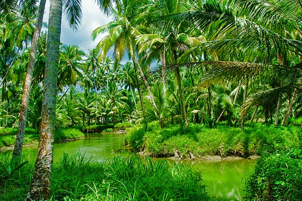 Discover the beautifull nature of Simeulue Island